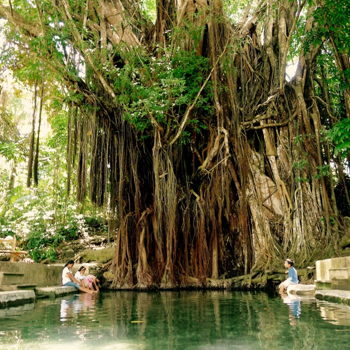 The 400-year old Enchanting Balete Tree, Lazi, Siquijor. It has a free fish spa too! Photo by: Fr. Jboy Gonzales SJ