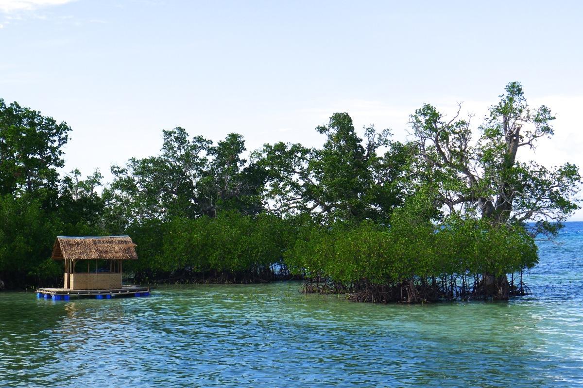 One of the mangrove sanctuaries along the circumferential road in Enrique Villanueva, Siquijor. Photo: Fr. JBoy Gonzales SJ