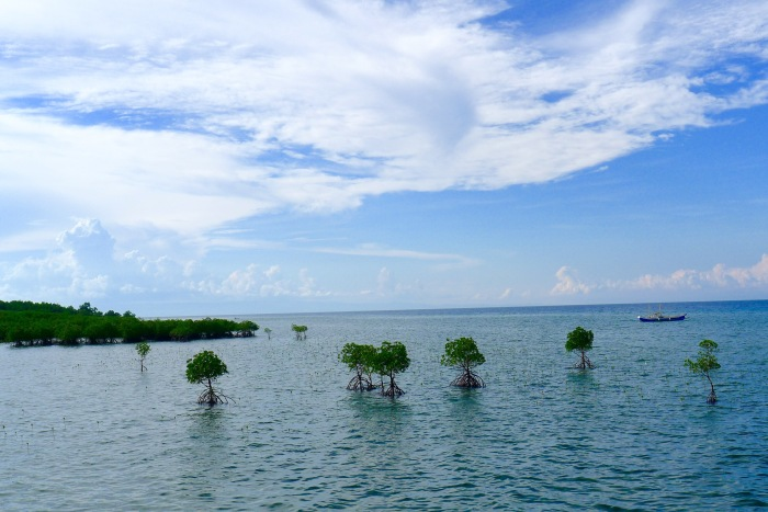The Tulapos mangrove belt viewed from the circumferential road, Enrique Villanueva, Siquijor. Photo: Fr. Jboy Gonzales SJ
