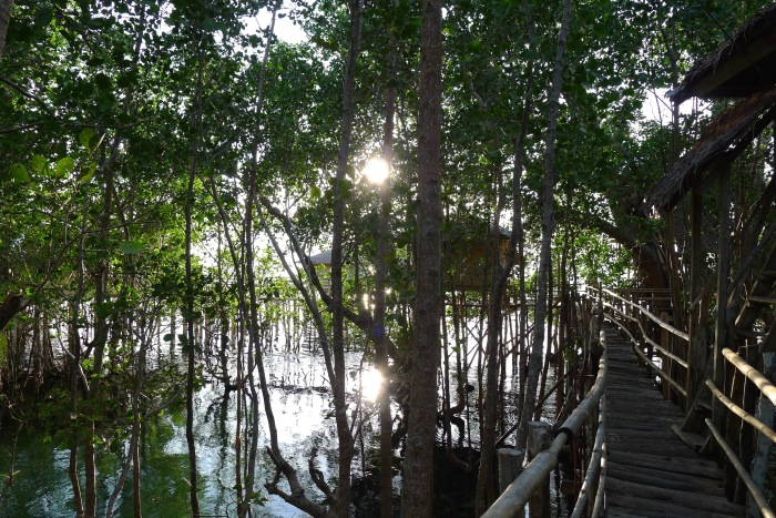 The mangroves of the Guiwanon Spring Park, Siquijor. Photo: Fr. Jboy Gonzales SJ