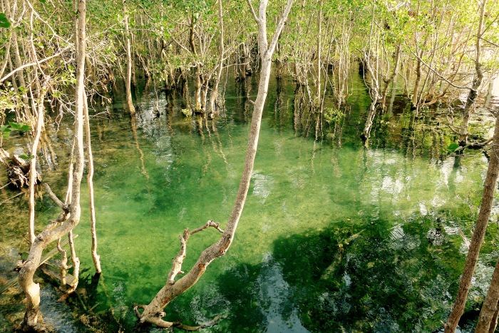 The natural fresh water spring of the Guiwanon Spring Park, Siquijor. It is within the mangrove forest. Photo: Fr. Jboy Gonzales SJ
