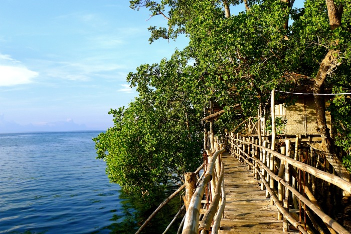 You can rent these tree houses for a very cheap price. Guiwanon Spring Park, Siquijor