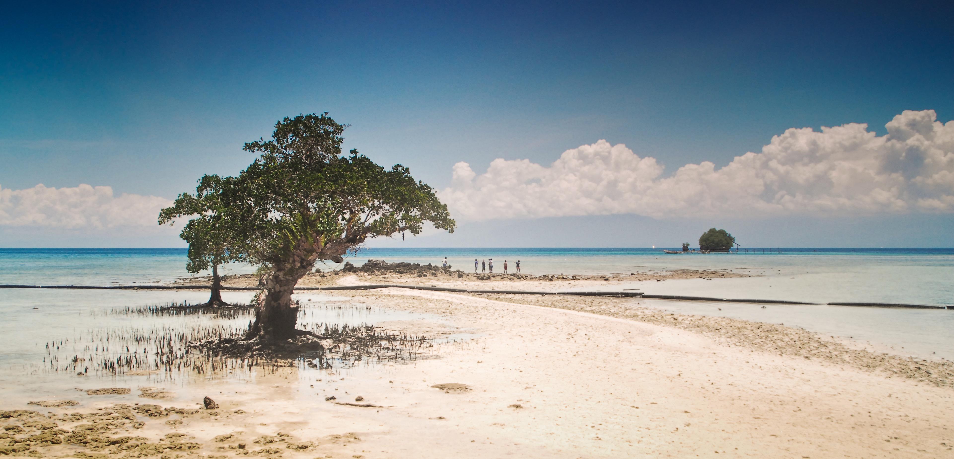 A lone mangrove looks like a sentinel of the long white rough sand bar. Eco-Spiritual Pilgrimage. Ateneo High School. Photo: Mr. Bok Pioquid, CSIP, AHS