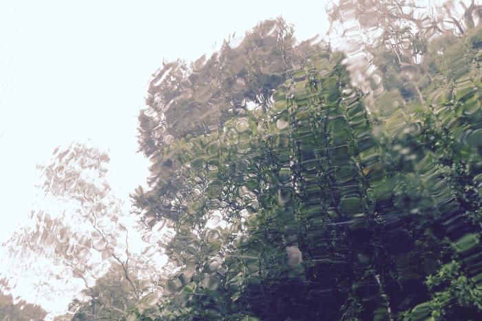 Bukidnon's Rain Forest