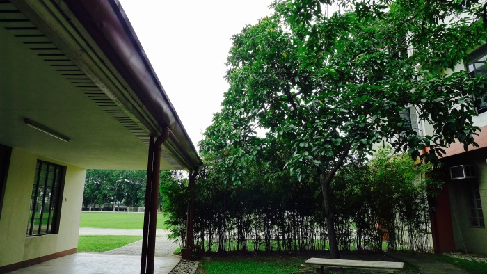 This is the avocado tree outside of the Immaculate Concepcion Chapel, Ateneo High School. You can reflect in this spot. Photo: Fr. Jboy Gonzales SJ