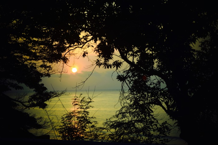 Trees and foliage frame the rising sun on our trip to Northern Cebu. 23 August 2015. Photo: Fr. Jboy Gonzales SJ